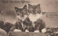 """1917 TWO BLACK & WHITE KITTENS """"Best Birthday Wishes"""" The IMPERIAL Series CAT"""