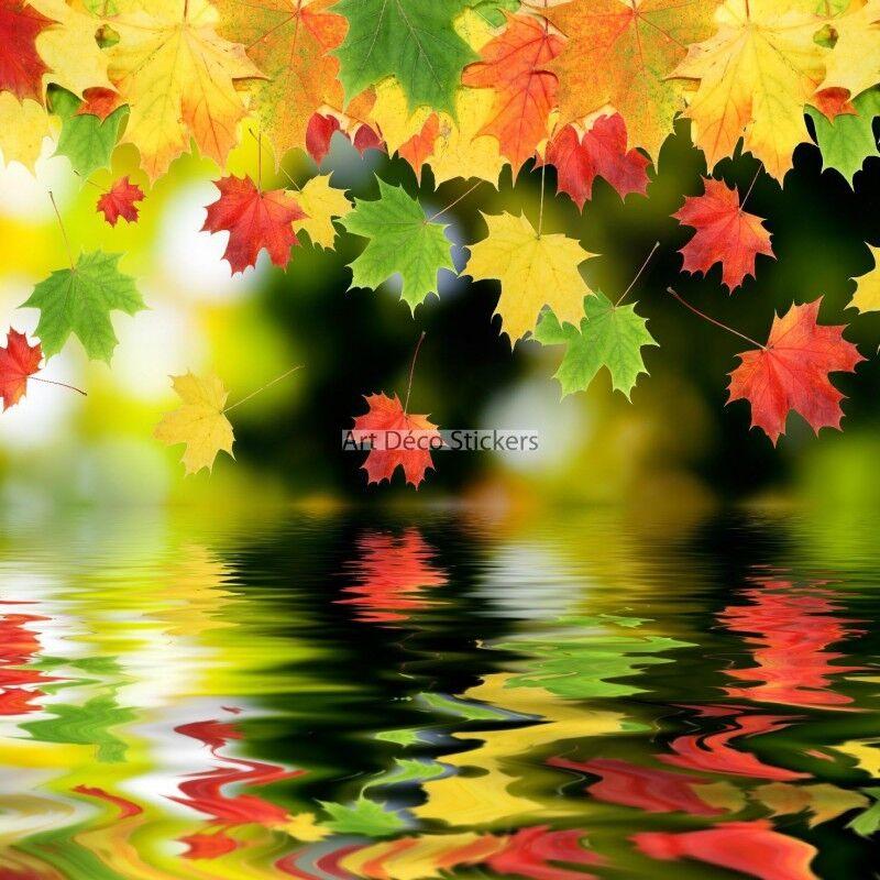 Papier peint peint peint géant Feuilles d'automne  11102 11102 | Porter-résistance  3698c6