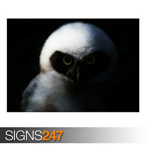 BABY-OWL-NIGHT-AE923-Photo-Picture-Poster-Print-Art-A0-A1-A2-A3-A4