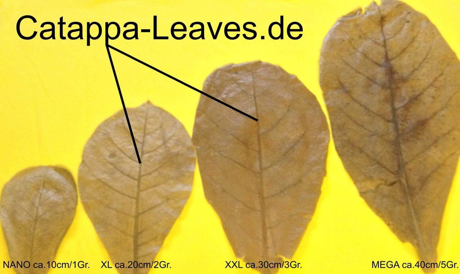 300 grammi FOGLIE MANDORLO INDIANO ca.20-25 cm - Catappa Leaves - Promozioni