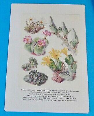 Affiche Impression Poster Plantes Grasses Plante Tortue