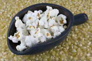 Popcorn-Seeds-JAPANESE-WHITE-Great-Kid-039-s-Project-Hull-less-200-Seeds