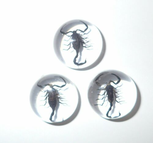 Insect Cabochon Black Scorpion Specimen Round 19 mm Clear 10 pieces Lot