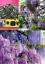 36-semi-GLICINE-bi-col-PROFUM-Fresco-x-OMBREGGIAR-e-Risparm-En-el-CLIMATIZZAT miniatura 1