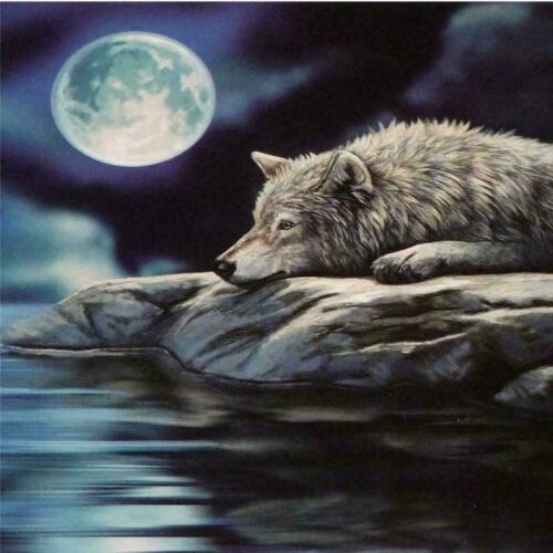 Lisa Parker Silencieux Reflections WOLF Wall Toile 28 cm x 28 cm Sealed Free P@P