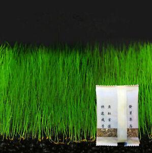 Lot-Plantes-Aquarium-filter-pompe-Premier-Plan-Tapis-Qatar-Animalerie-Graines