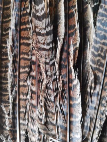 20 x Fasanenfedern Feder  28 cm lang Federkiel Vogelfedern Schreibfeder Basteln