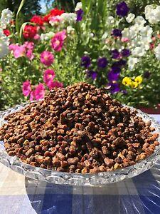 Frisch-Bienenbrot-Perga-Fermentierter-Bluetenpollen-500g