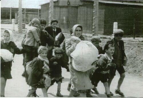 Concentration Camp. WW II German Photo /</> Jewish Women /& Children