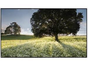 "LG 55XF3C-B 55"" HDMI Widescreen Full HD IPS Monitors - LCD Flat Panel Certified"