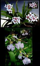 Orchideen. 4 Maximumkarten. Weißrußland 2016
