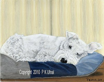 By P K Ufnal Dog Art,Painting,White Schnauzer Print #8