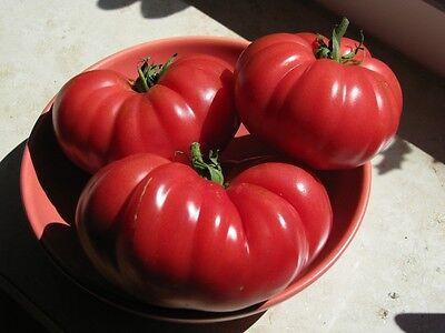 Muchamiel spanische Tomate rote Fleischtomate saftig und aromatisch