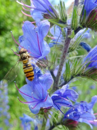 Papillon et abeilles Saule 25 G intérieur fleurs sauvages pleut pneus
