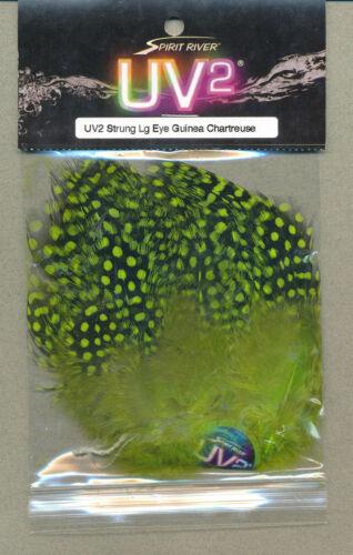 UV2 large eyed guinea hackle strung chartreuse     GUINL-125