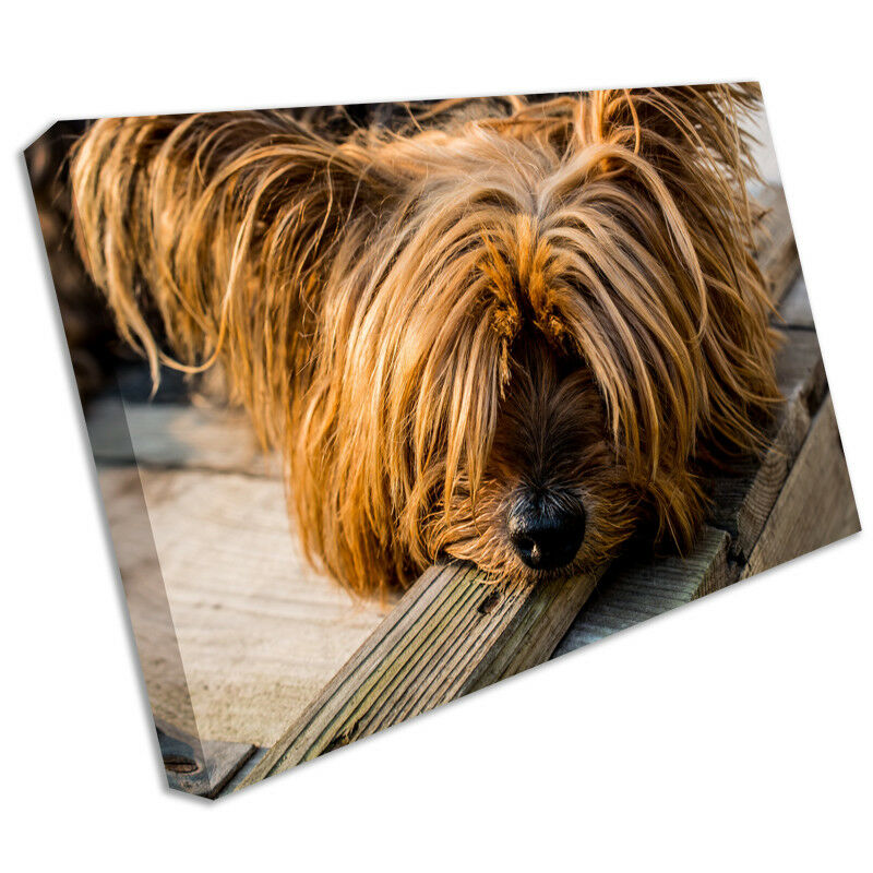 Dog animal canvas print framed photo picture wall artwork terrier anim151