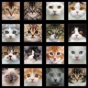24-034-Fabric-Panel-Elizabeth-039-s-Studio-Adorable-Pets-Cat-Face-Blocks-Black