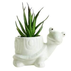 Image Is Loading Ceramic White Turtle Flower Pot Animal Succulent Planter