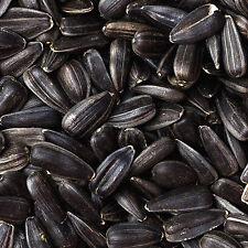 60Kg (4x 15Kg) Black Sunflower Seeds Wild Bird Food Deal **NOT 20KG 25KG 30KG**