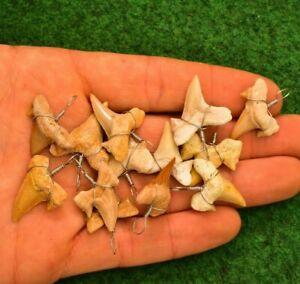 10 Shark Tooth Pendants Cretolamna Otodus obliquus 70 Million Year, Wholesale