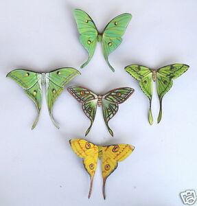 Moon-Moth-Magnets-Luna-India-African-Spanish-Madagascar
