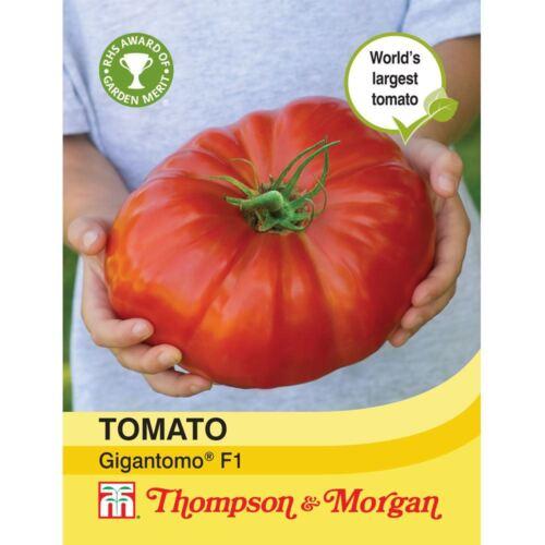 5 graines THOMPSON /& Morgan-Légumes-Tomate gigantomo F1 hybride