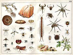 1887-SCHUBERT-CHROMO-23-ARTHROPODS-Arachnids-Barnacle-Flies-Flea-Mites-Spiders
