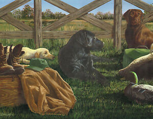 Duck Hunting The Dogs Are Ready And The Decoys Country Wallpaper