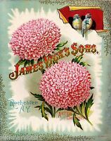 James Vick's Aster Vintage Flowers Seed Packet Catalogue Advertisement Poster
