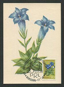 Capable La Pologne Mk 1963 Flore Fleurs Flowers Maximum Carte Carte Maximum Card Mc Cm C9335-afficher Le Titre D'origine Produire Un Effet Vers Une Vision Claire