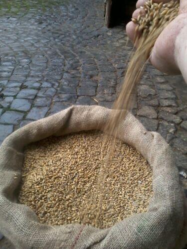 Cebada 25 kg Avalon cosecha 2020-envío DHL, alimentos para animales, de campesinos 0,66 €/kg