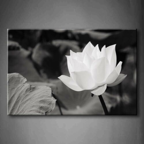 Framed White Lotus Wall Art Painting Flower Picture Canvas Print Flower Pictures