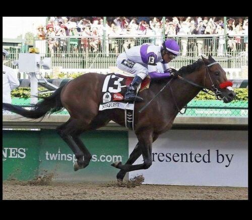 2016 Kentucky Derby Winner Nyquist PHOTO Horse Racing Churchill Downs