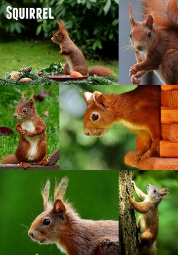 - Neuheit Souvenir Spaß Kühlschrank Magnet Collage Eichhörnchen Brandneu