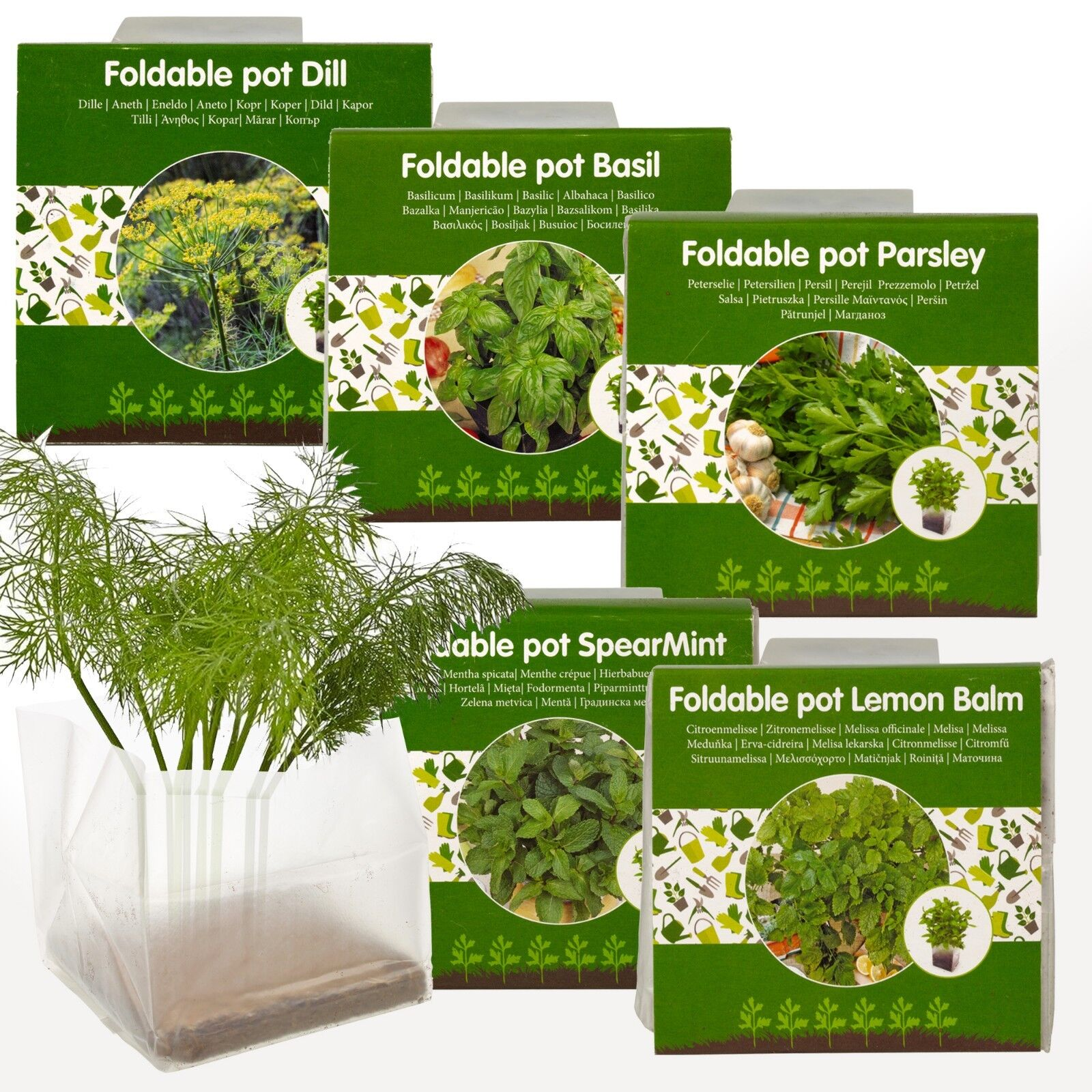 5 Herbs Seeds Grow Your Own Veg Indoor Kit Plant Pot Garden Greenhouse Plant Set 1