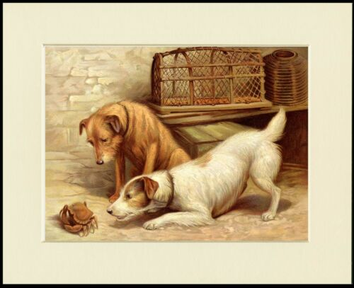 JACK RUSSELL & IRISH TERRIER DOGS EXAMINE CRAB DOG PRINT MOUNTED READY TO FRAME