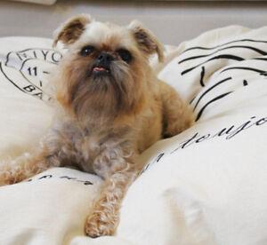 Snuggle-Pod-Dog-Bed-amp-Cat-Bed-VINTAGE-STYLE-100-COTTON-Large