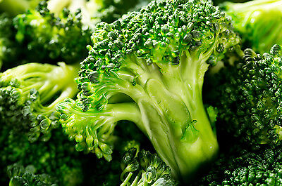 120 Graines Laitue Merveille des 4 saisons Méthode BIO seeds salade légumes