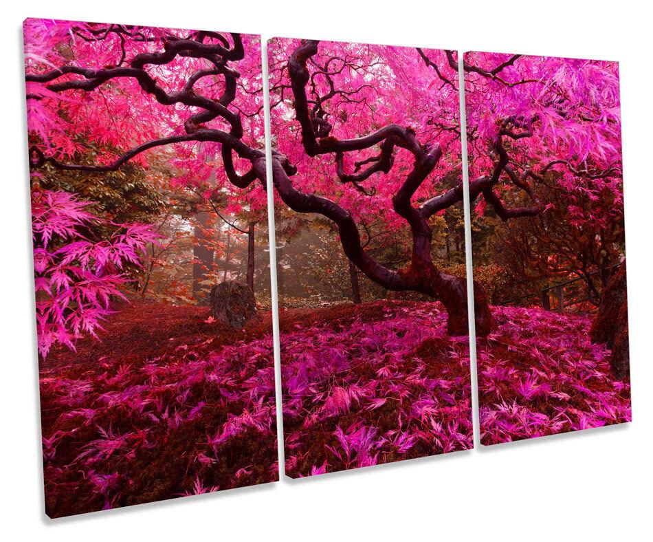 Acero giapponese autunno ALBERO rosa triplicare CANVAS Wall Wall Wall Art Box incorniciato stampa fcda49