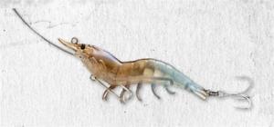"""2 Live Target Hybrid Shrimp SSH100SK919 4/"""" 1//2 Oz Clear"""