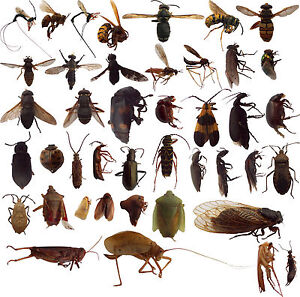 35 dead bugs entomology class insect bug collection identified usa