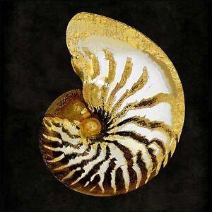 Caroline-Kelly-Golden-Ocean-Gems-II-Camilla-imagen-de-pantalla-maritimo-Conchas