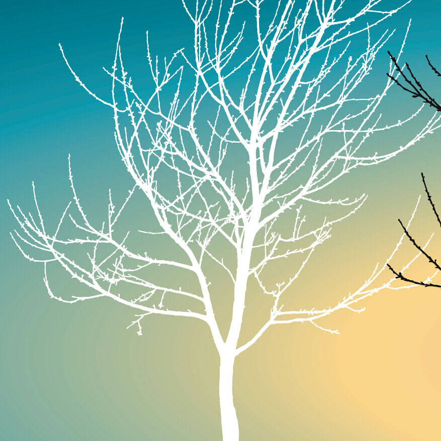 3D Bare Tree bluee Sky 8 Wall Paper Wall Print Decal Wall Deco Wall Indoor Murals