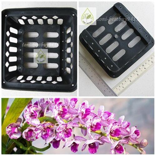 """5 FREE 1 Vanda Orchid Mash Pot Basket 6/"""" Square Hanging Phalaenopsis Paphiopedil"""