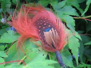 Ring-Neck-Pheasant-and-Cinnamon-Burnt-Umber-Feathers-Arts-amp-Crafts-Fly-Tying