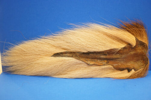 Bucktail Northern  large Wapsi U.S.A TAN
