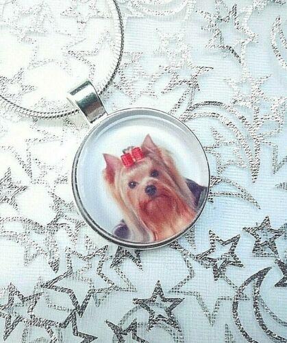 Tu Foto De Yorkshire Terrier en un Colgante 16 18 20 22 pulgadas Cadena con Caja De Regalo
