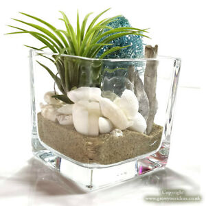 Air Plant Tillandsia Kit Glass Cube Terrarium With Water Element