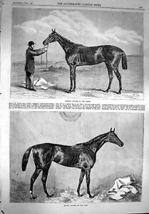 Original-Old-Antique-Print-1867-Hermit-Horse-Winner-Derby-Hippia-Oak-Victorian