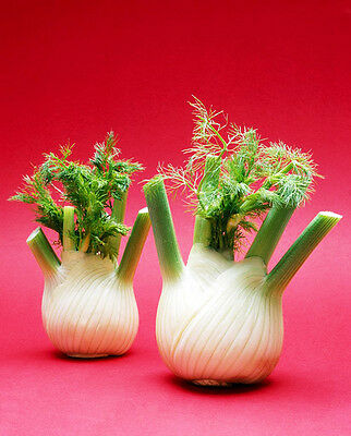 Original Package 100 Fennel Seeds Foeniculum Vulgare Aniseed Vegetable Seed C019